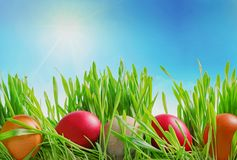 Colorful decorated easter eggs in grass on sky background Royalty Free Stock Images