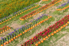 Colorful decorated flower garden with pumpkin Stock Photo