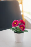 Colorful decoration artificial flower in the vase at home Royalty Free Stock Image