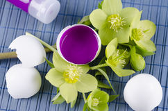 Colorful decoration for Easter with hellebore and egg shell with magenta tempera paint. On a blue pad royalty free stock photography