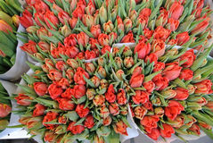 Bouquets of tulips Stock Photography