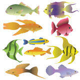 10 colorful decorative fishes.Vector illustration Stock Photos