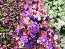 Colorful decorative flowers Royalty Free Stock Photos