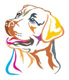 Colorful decorative portrait of Labrador Retriever vector illust. Colorful decorative portrait of dog  Labrador Retriever, vector illustration in different Royalty Free Stock Image