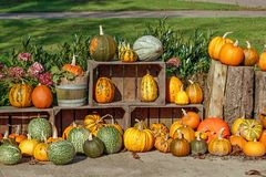 Colorful decorative pumpkin collection Royalty Free Stock Image