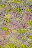 Colorful decorative relief plaster on wall Stock Image