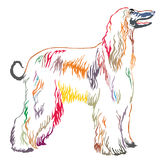 Colorful decorative standing portrait of Afghan greyhound vector Royalty Free Stock Image