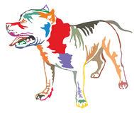 Colorful decorative standing portrait of American Pit Bull Terri. Colorful decorative portrait of standing in profile American Pit Bull Terrier, vector isolated Royalty Free Stock Image