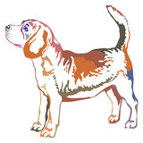 Colorful decorative standing portrait of beagle vector illustrat Royalty Free Stock Photography