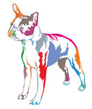 Colorful decorative standing portrait of boston terrier vector i. Colorful decorative portrait of standing in profile boston terrier, vector isolated Royalty Free Stock Photos