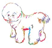 Colorful decorative standing portrait of dog Bichon Frise vector. Colorful decorative portrait of standing in profile Bichon Frise, vector isolated illustration royalty free illustration