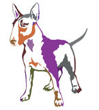 Colorful decorative standing portrait of dog Bull terrier. Decorative contour portrait of standing in profile dog Bull terrier, colorful vector isolated Stock Photo