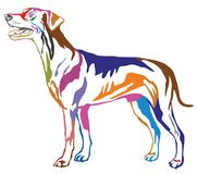 Colorful decorative standing portrait of dog German Pinscher st. Colorful contour decorative portrait of standing in profile dog German Pinscher standart, vector Stock Photo