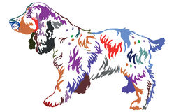 Colorful decorative standing portrait of dog Russian Spaniel. Colorful contour decorative portrait of standing in profile dog Russian Spaniel, vector isolated Royalty Free Stock Photo