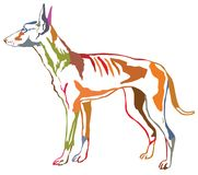 Colorful decorative standing portrait of Podenco Ibicenco dog ve. Colorful contour decorative portrait of standing in profile dog Podenco Ibicenco Ibizan Hound Stock Photo