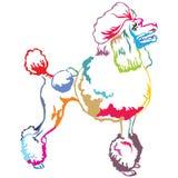 Colorful decorative standing portrait of Poodle vector illustrat. Colorful contour decorative portrait of standing in profile Poodle, vector isolated Stock Image