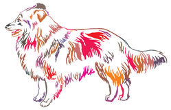 Colorful decorative standing portrait of Sheltie vector illustra Royalty Free Stock Photo