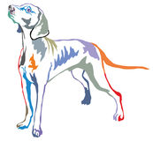 Colorful decorative standing portrait of Weimaraner vector   Stock Photography