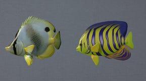 Colorful deep sea fish Stock Photos