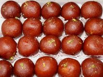 Delicious Gulab Jamun stock photography