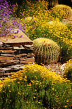 Colorful desert garden. With cacti and flowers Royalty Free Stock Images