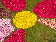 Colorful design made on the ground with flowers, moss and petals. On the occasion of an Italian religious festival royalty free stock photography