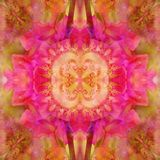 CENTRAL FLOWER MANDALA WITH ABSTRACT PETALS IN PINK, FRACTAL IMAGE IN THE CENTER. VINTAGE IMAGE royalty free illustration