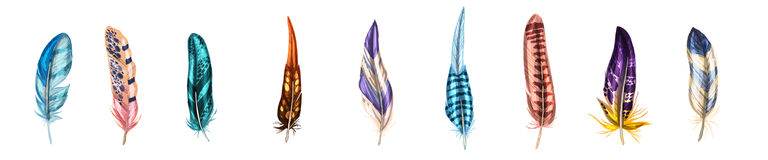 Colorful detailed bird feathers, isolated on white background. Vector illustration. Royalty Free Stock Photos