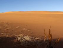Colorful details, sand dune Royalty Free Stock Photo
