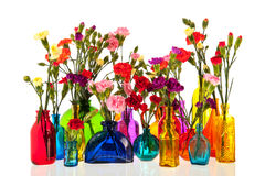 Dianthus flowers in bottles. Colorful dianthus flowers in glass bottles Royalty Free Stock Image