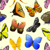 Colorful different butterfly wings seamless pattern vector illustration. Royalty Free Stock Photography