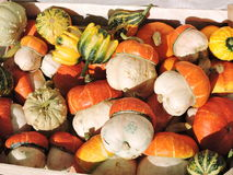 Colorful different shape pumpkins Royalty Free Stock Photo