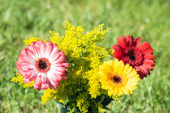 Colorful differently colored autumn flowers Stock Photos