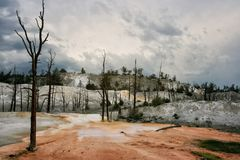 Terraces of Mammoth Hot Springs, Yellowstone. Colorful dirt and dry dead trees at terraces of Mammoth Hot Springs, Yellowstone National Park, Wyoming, United Royalty Free Stock Images