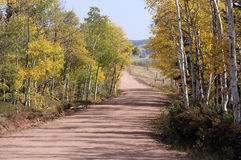 Colorful dirt road. Line of sight down a turning dirt road with aspen trees in fall colors on both side royalty free stock photo