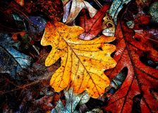 Autumn Colors Collection royalty free stock images
