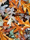 Autumn Colors Collection Royalty Free Stock Photography