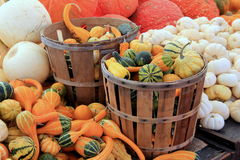 Colorful display in various pumpkins and squash at farmers markets Stock Photo