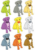 Colorful dogs Stock Photography