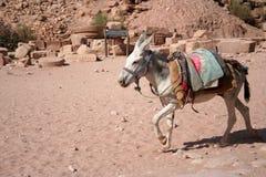 Colorful Donkey Stock Images