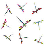 Colorful dragonflies Stock Images