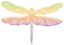Colorful dragonfly. Dragonfly wing with delicate texture Stock Photos