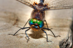 Colorful Dragonfly in hdr Royalty Free Stock Images