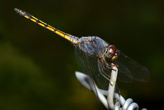 Colorful of Dragonfly in nature stock photo