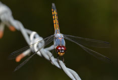 Colorful of Dragonfly in nature Stock Photos