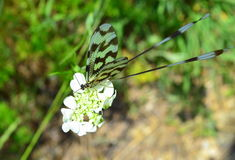 Colorful dragonfly on white flower stock photo