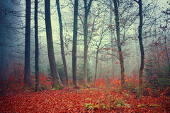 Colorful dreamy autumn forest Stock Photo