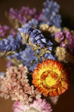 Colorful dried flowers Royalty Free Stock Photography