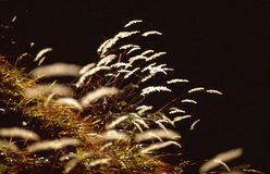Colorful dried grass Stock Photos