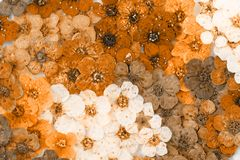 Colorful dried spring flowers Stock Photography